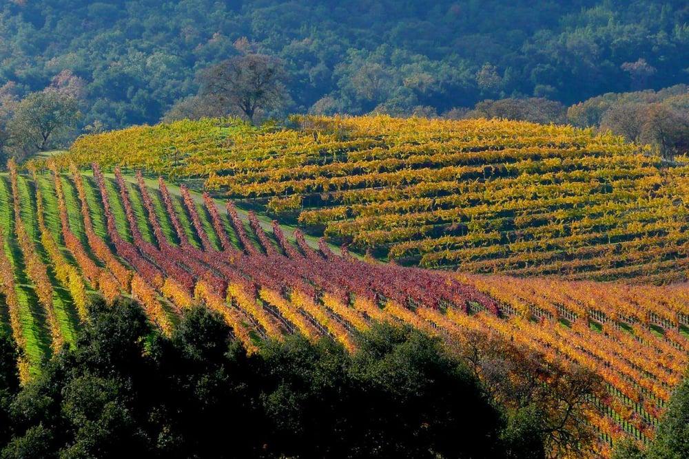 Divulgação: Joullian Vineyards