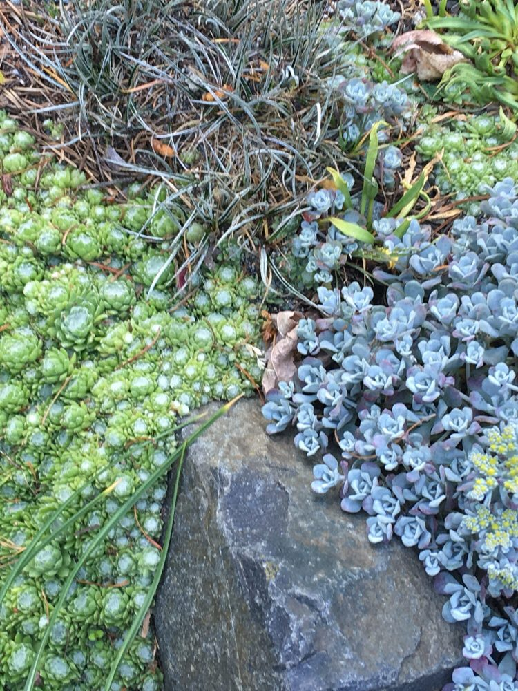 Evergreen Arboretum and Gardens: 145 Alverson Blvd, Everett, WA