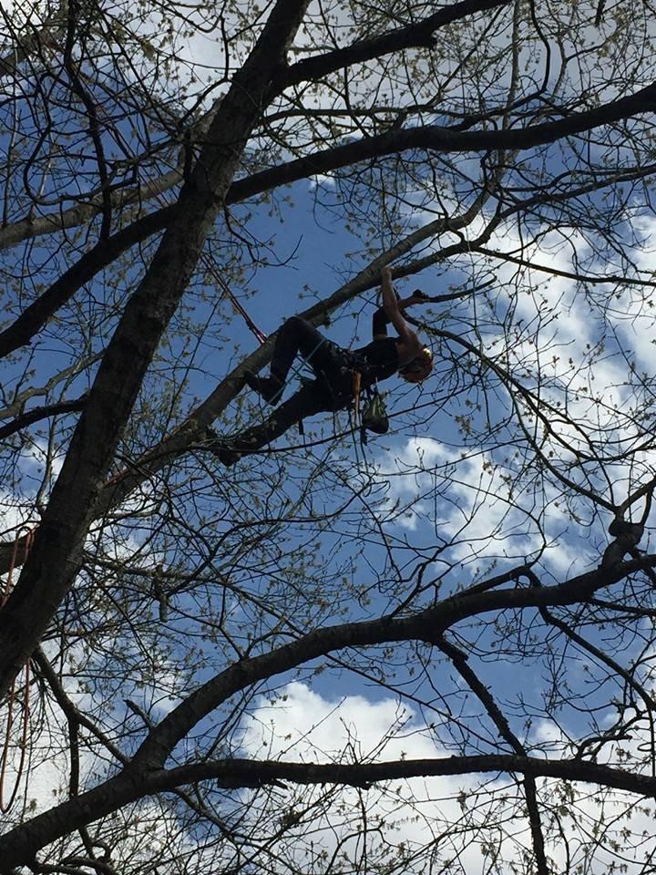 Greenlife Tree Care