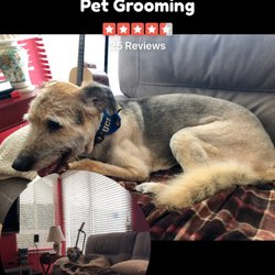 Barks N Bubbles Pet Grooming 18 Photos 26 Reviews Pet Groomers