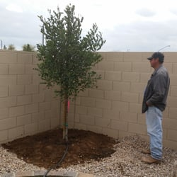 Photo Of Whitfill Nursery Gilbert Az United States