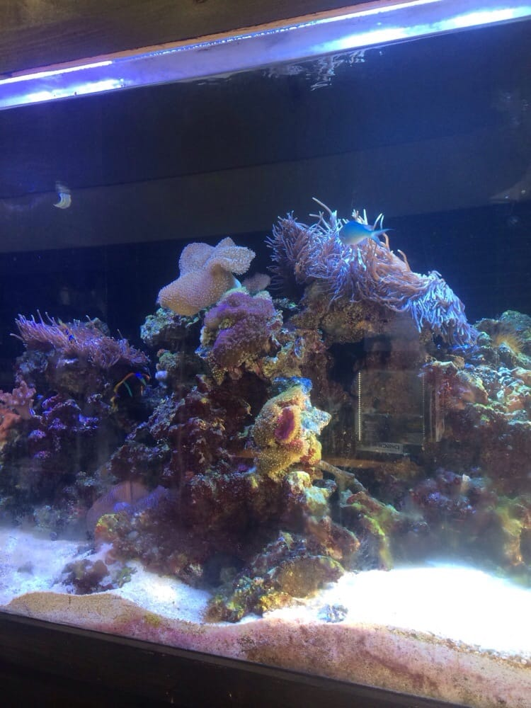 Reef Life Aquariums: 5511 Hwy 280, Birmingham, AL