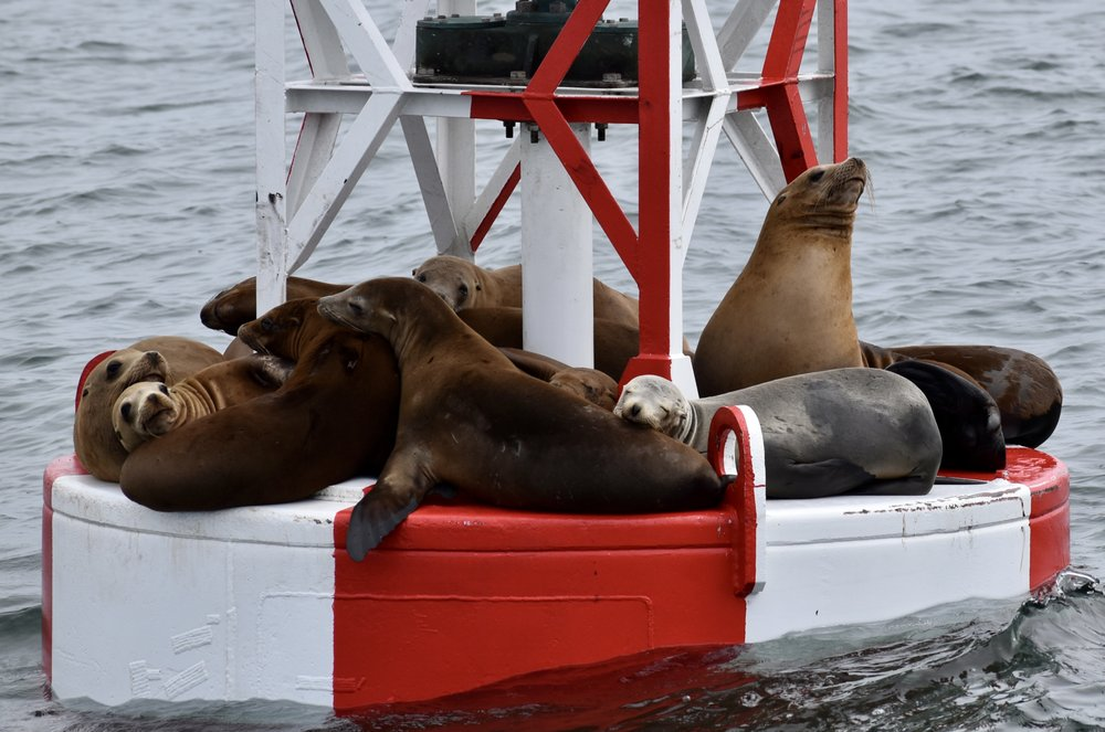 Social Spots from Santa Cruz Whale Watching