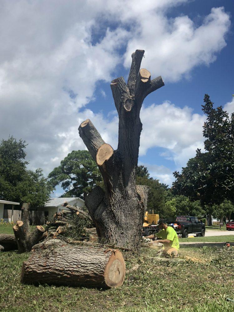 Experienced Tree Service
