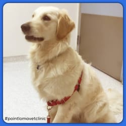 Photo of Point Loma Veterinary Clinic   San Diego  CA  United States  Yelp