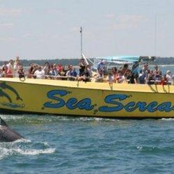 Myrtle Beach Dolphin Cruises - Sea Thunder - 24 Photos & 28