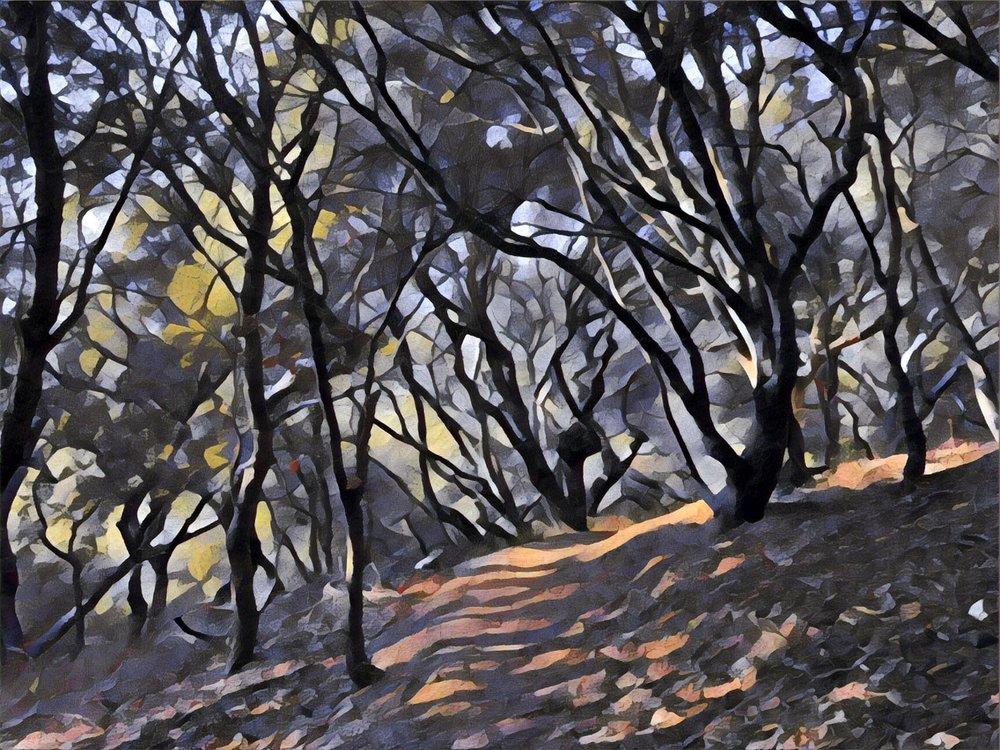 Hillside Natural Area: 7501 Schmidt Ln, El Cerrito, CA