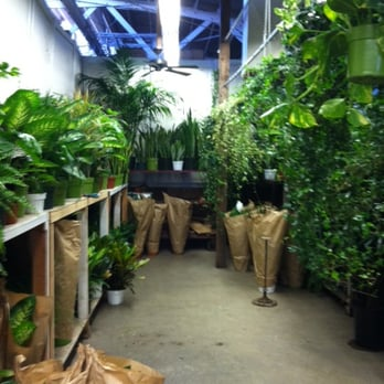 Photo Of Jay S Plants Los Angeles Ca United States Medium To