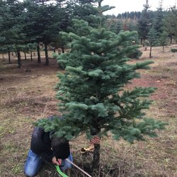 Top 10 Best Christmas Trees In Beaverton Or Last Updated March