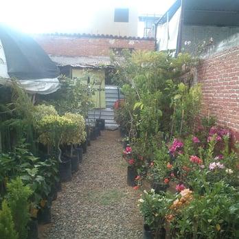 Vivero vida verde 10 fotos viveros y jardiner a for Viveros en oaxaca