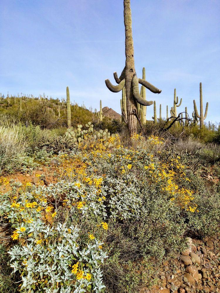 Spur Cross Ranch Conservation Area: 44000 N Spur Cross Rd, Cave Creek, AZ