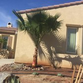 Photo Of Moon Valley Nurseries Coachella Ca United States Mexican Fan Palm