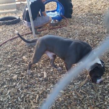 Brentwood Ca Dog Parks