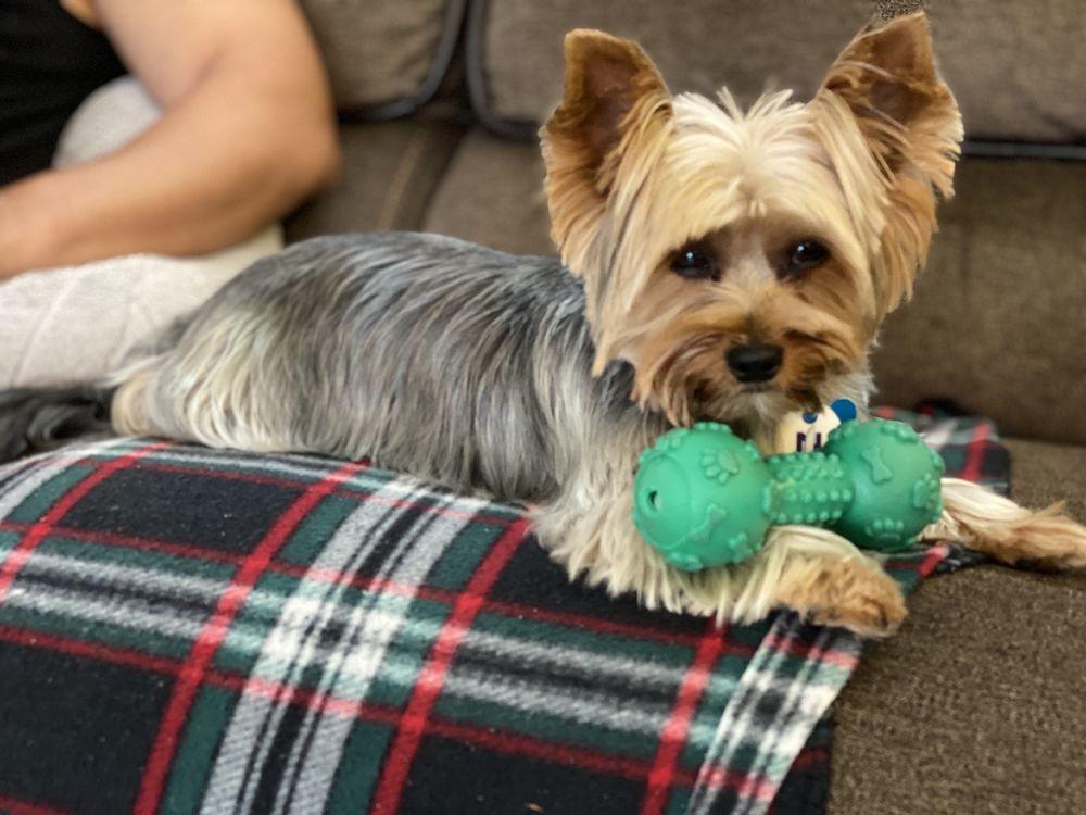 Luzy's Dapper Dog: 180 Hempstead Ave, Lynbrook, NY