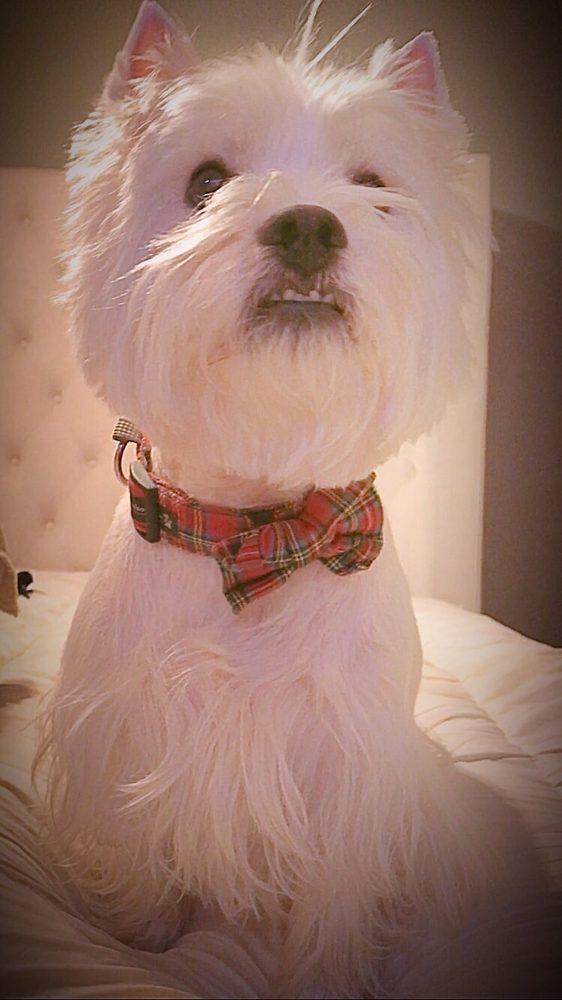 Doggie Washerette