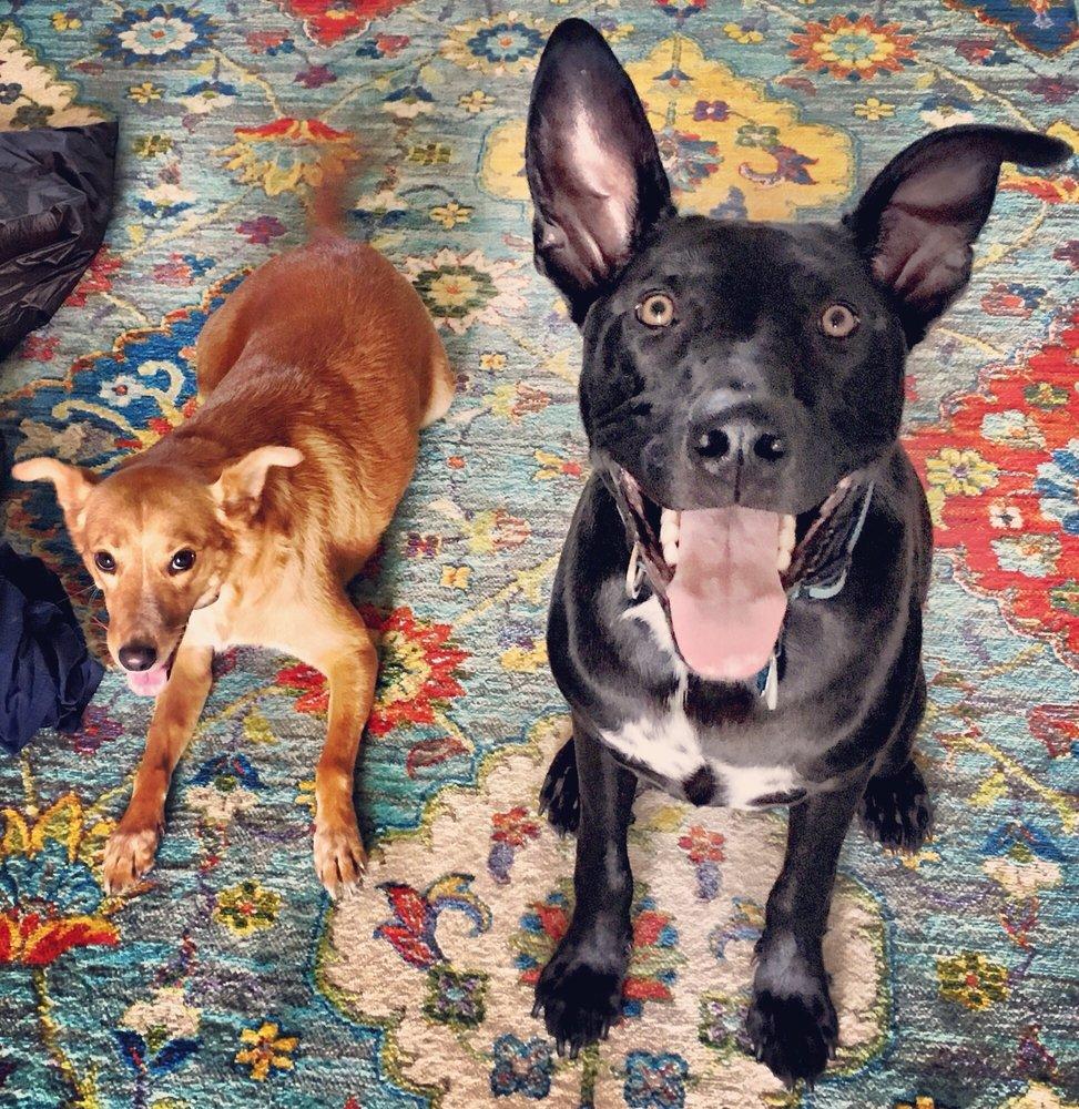 Island Dog Pet Spa: 2213 Florida Blvd, Neptune Beach, FL