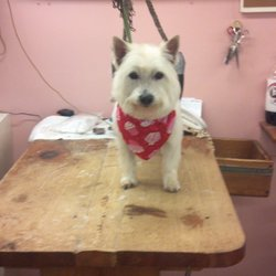 Almost heaven grooming salon get quote 27 photos pet for 712 salon charleston wv reviews