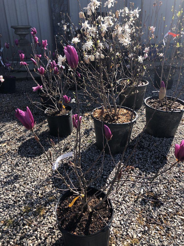 Sharum's Garden Center: 750 S Maestri Rd, Springdale, AR