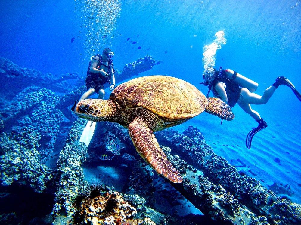 West Maui Expeditions: Lahaina, HI