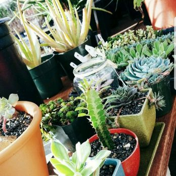 Photo Of Yamagami S Nursery Cupertino Ca United States Succulents