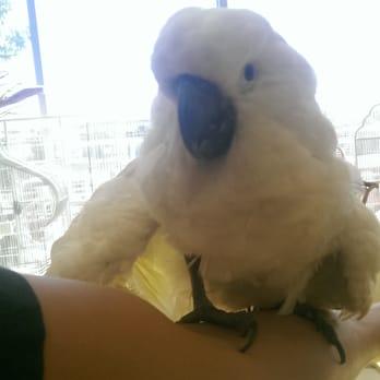 Omar's Exotic Birds - 84 Photos & 85 Reviews - Pet Stores - 903 E