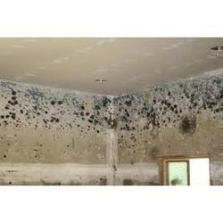 Photo Of Moisture Mold Detection Mission Viejo Ca United States