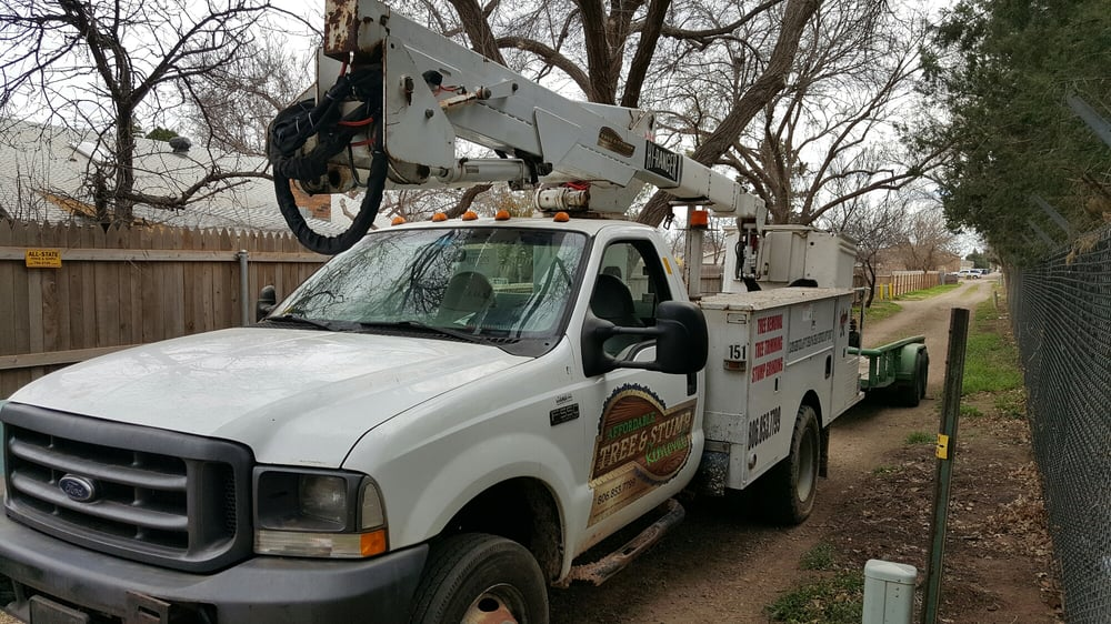 Affordable Tree & Stump Removal: Lubbock, TX
