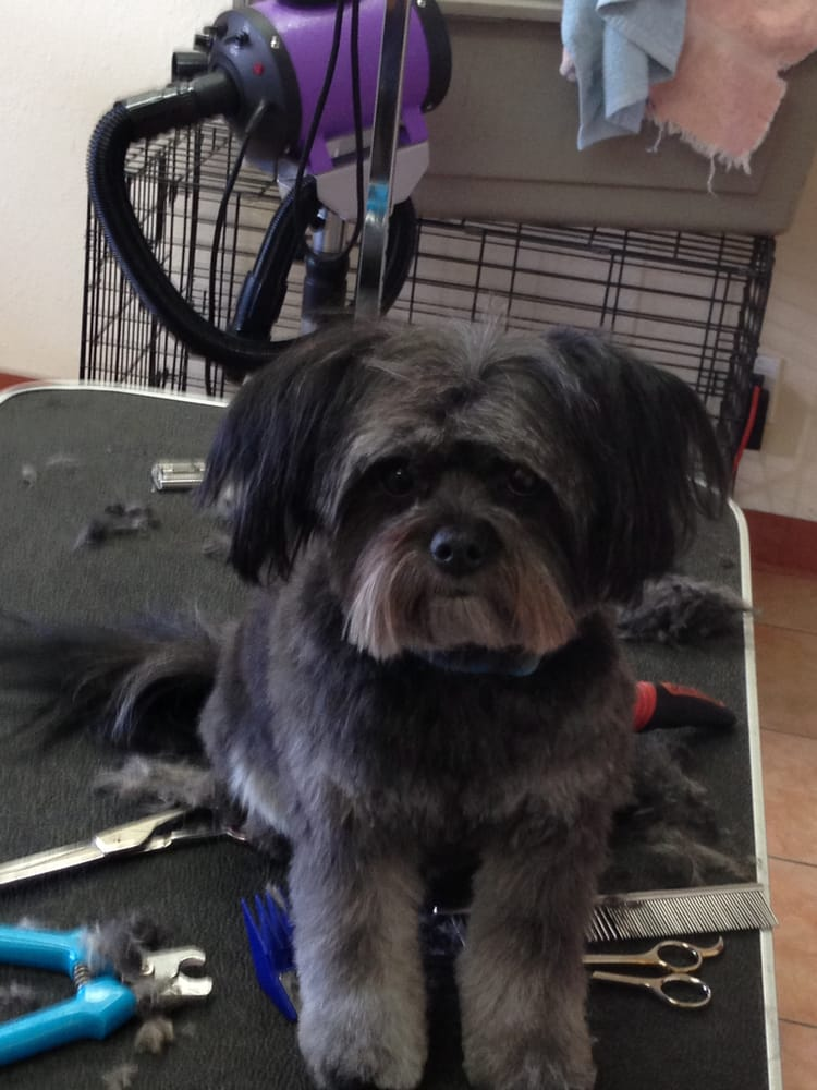 Photos for Happy Dog Grooming - Yelp - photo#23