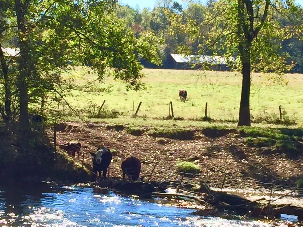 The Tater Patch Farm: 5390 Big Creek Rd, Ellijay, GA