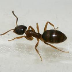 Photo Of Eco Care Pest Management Ellicott City Md United States