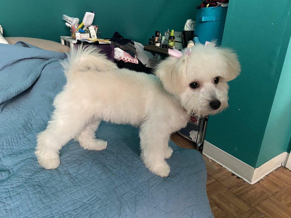 One Lucky Puppy #2: 6332 26th St, Berwyn, IL