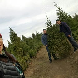 Summit Christmas Tree Farm - 26 Photos & 34 Reviews - Christmas ...