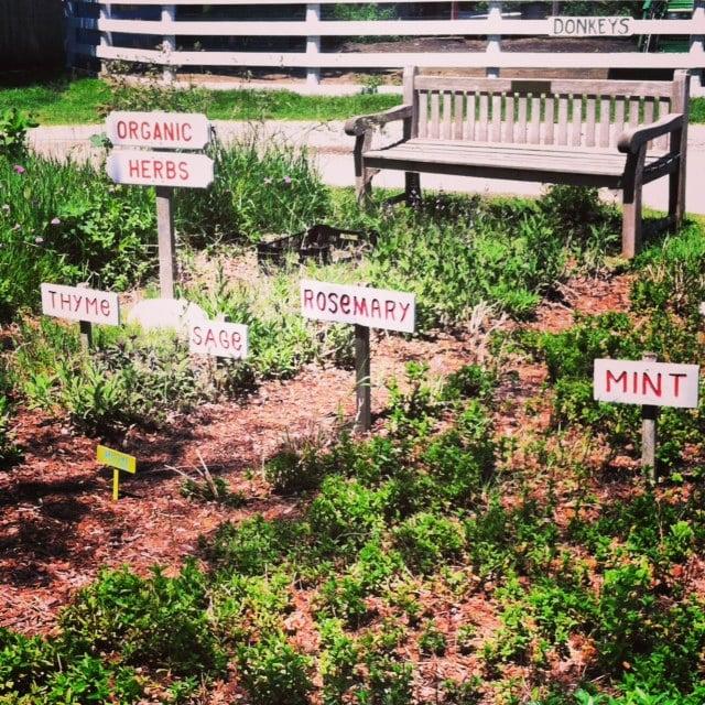 Vicki's Veggies: 597 Montauk Hwy, Amagansett, NY