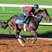 keeneland    reviews horse racing  versailles  lexington ky phone