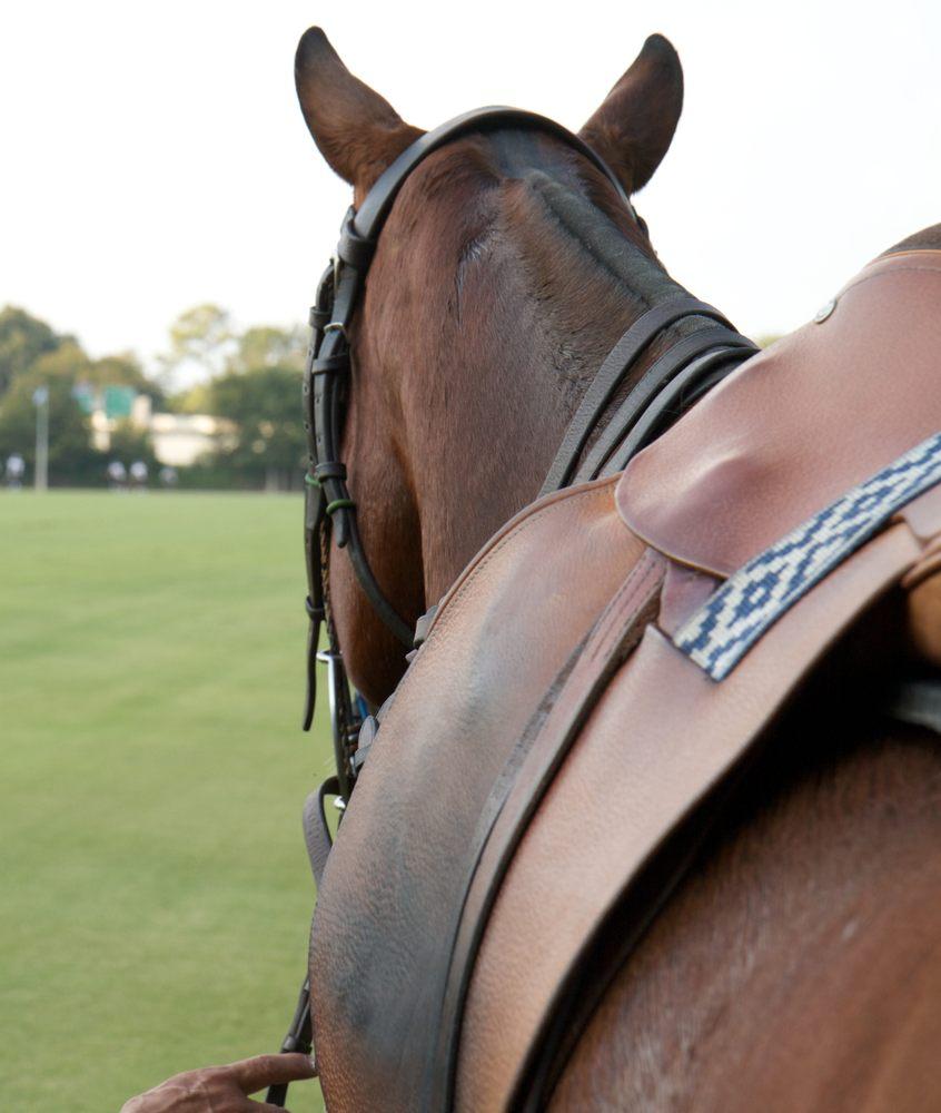 Houston Polo Club: 8552 Memorial Dr, Houston, TX