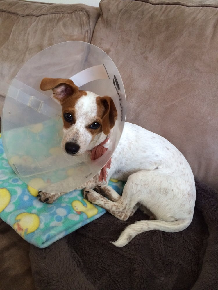 She healed sooo well that when the staples was removed Golden state humane society garden grove ca