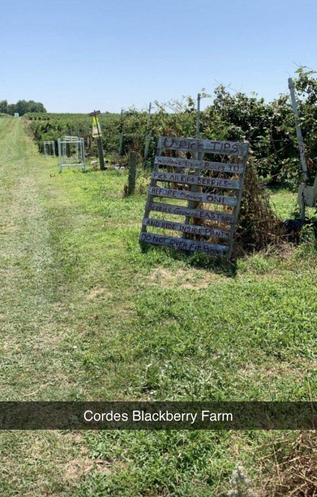 Cordes Berry Farm: 6467 W 550th N, Roann, IN