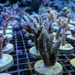 Oceanlife Aquariums - 48 Photos & 26 Reviews - Aquarium Services ...