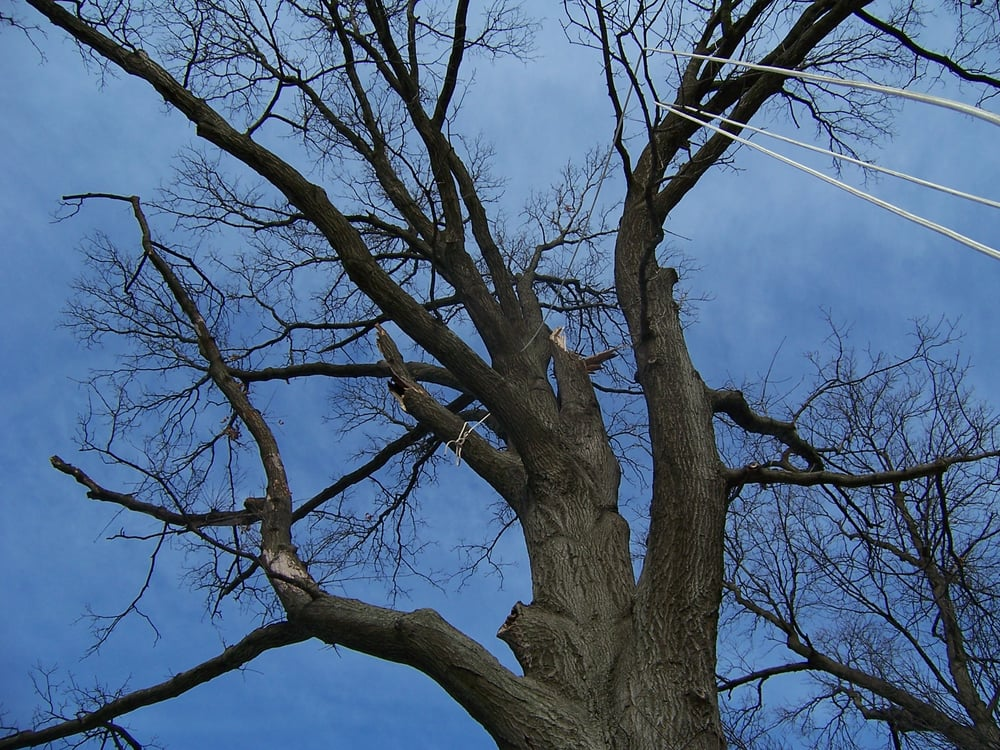 The 1 Tree Service