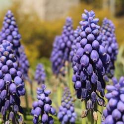 Norfolk Botanical Garden 806 Photos 123 Reviews Venues Event Spaces 6700 Azalea Garden