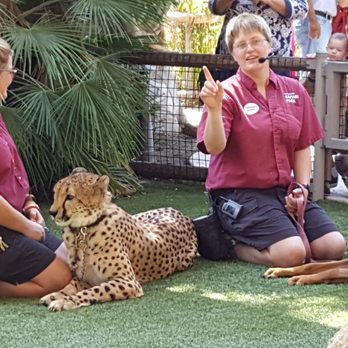 Can I Bring My Dog To The San Diego Zoo