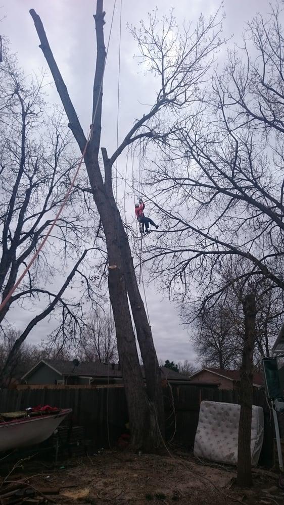 Canales tree service rimozione alberi 4573 fairplay for Cabine vicino a fairplay co