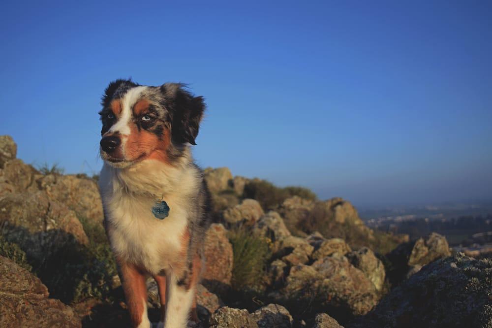 Rocky Top Kennels: Creston, CA