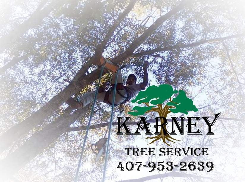 Photos For Karney Tree Service Yelp