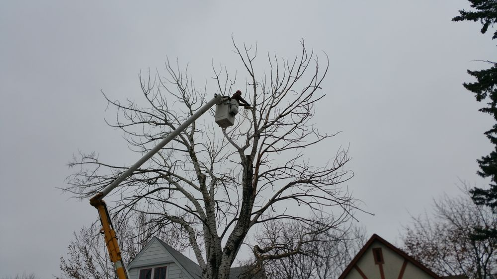 Tree-Mendous Tree Service: 18700 Hartley Lake Rd, Brainerd, MN