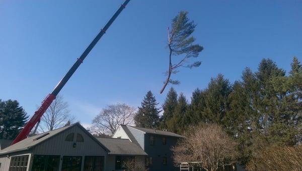 Community Tree Service 163 Billerica Rd Chelmsford Ma Unknown Mapquest