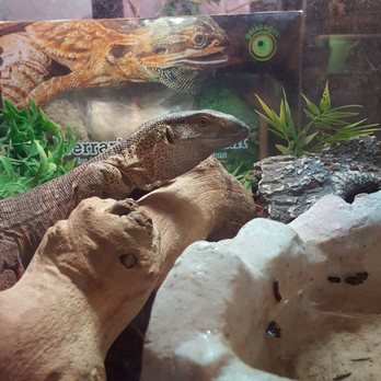 exotic pets 76 photos \u0026 108 reviews pet stores 2410 n decaturphoto of exotic pets las vegas, nv, united states happy 4th of