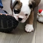 Manhattan Puppies & Kittens - 2019 All You Need to Know