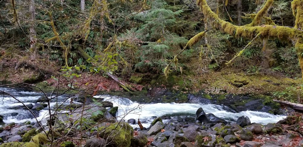 Old Salmon River Trail: Salmon River Rd, Clackamas, OR
