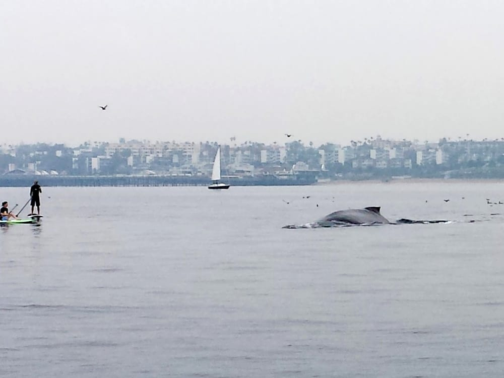 Whale sighting on a rainy day 1 in sequence yelp for Marina del rey fishing